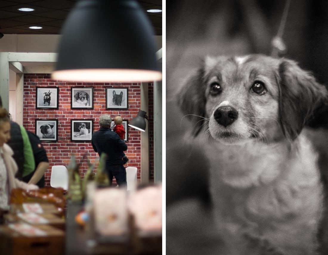 Hundegalerie im Kaupirat-Store